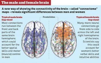 dating-hjerneopdeling-medium.jpg