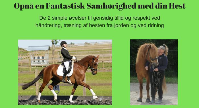Opnå en Fantastisk Samhørighed med din Hest Product Image.png