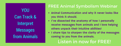 FB-cover-animal-symbolism-large.png