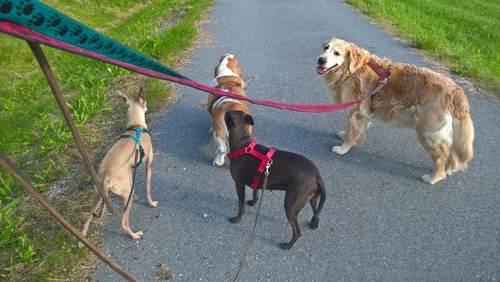 Hundepasser3-large.jpg