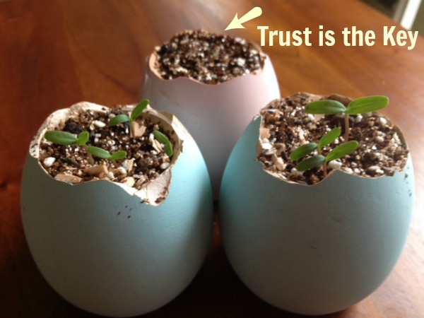 Trust is Like Planting Seeds
