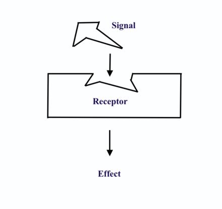 Hormon receptor