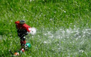 landscaping and watering