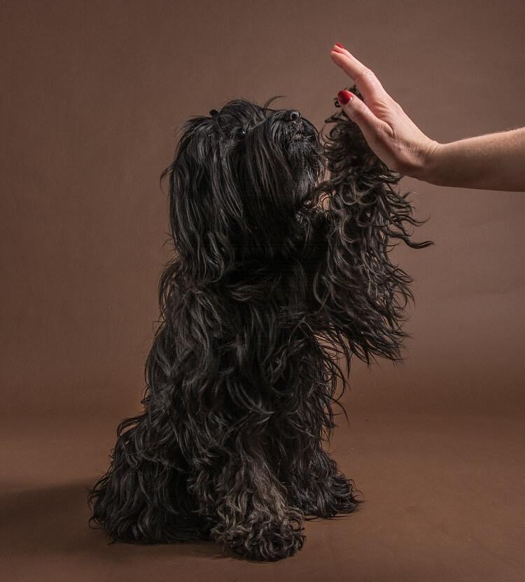 nose work powerdog hundetræning