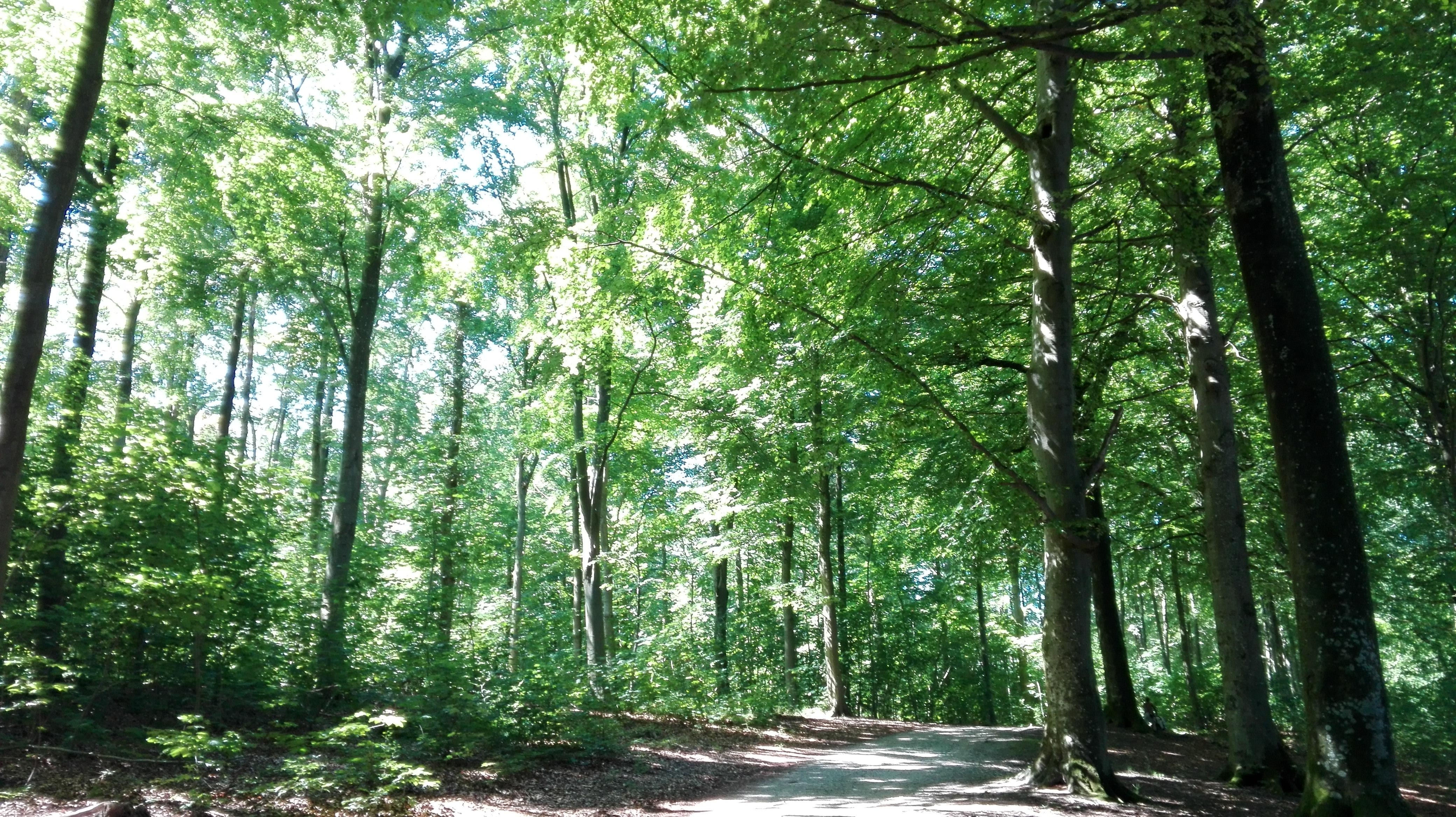 Vejen til et bevidst rigt liv