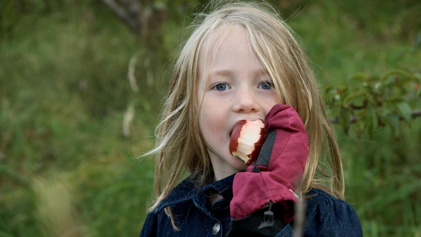 Efterårsferie plukke æbler til æblekage